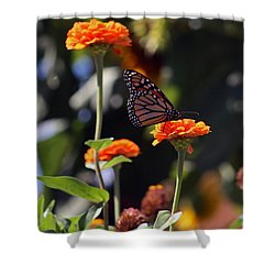 Monarch Butterfly And Orange Zinnias Shower Curtain
