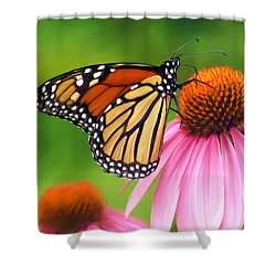 Monarch Butterfly Shower Curtain by Christina Rollo