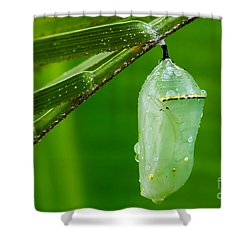 Monarch Butterfly Chrysalis Shower Curtain by Dawna  Moore Photography
