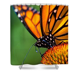 Monarch Butterfly Headshot Shower Curtain by Bob Orsillo
