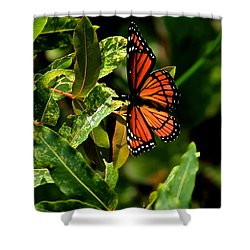 Viceroy Butterfly II Shower Curtain