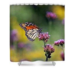 Monarch Butterfly In Field On Verbena Shower Curtain by Karen Adams