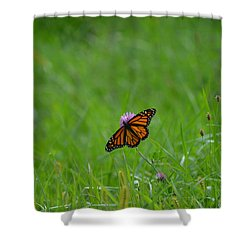 Shower Curtain featuring the photograph Monarch Butterfly by James Petersen