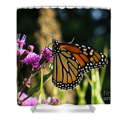 Shower Curtain featuring the photograph Monarch Butterfly by Lingfai Leung