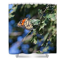 Shower Curtain featuring the photograph Monarch Butterfly by Rebecca Davis