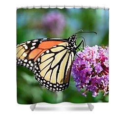 Monarch Butterfly Soaking Up The Sun Shower Curtain