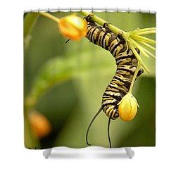 Monarch Caterpillar Shower Curtain