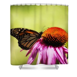 Monarch Glow Shower Curtain by Shelly Gunderson