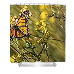 Monarch Hatch Shower Curtain