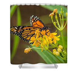 Shower Curtain featuring the photograph Monarch by Jane Luxton
