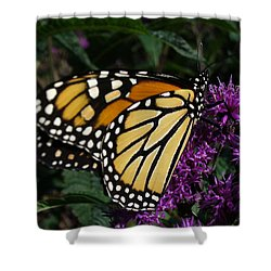 Shower Curtain featuring the photograph Monarch by Lingfai Leung