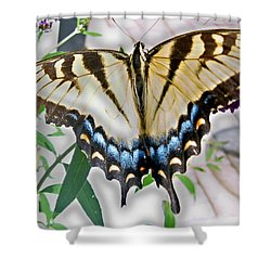 Monarch Majesty Shower Curtain