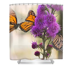 Monarch Movement Shower Curtain