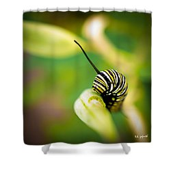 Shower Curtain featuring the photograph Monarch Offspring Squared by TK Goforth