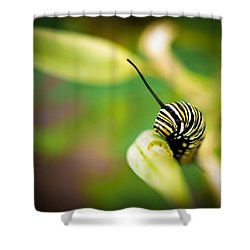 Shower Curtain featuring the photograph Monarch Offspring by TK Goforth