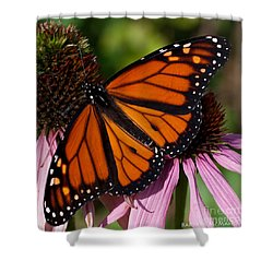 Shower Curtain featuring the photograph Monarch On Purple Coneflower by Barbara McMahon