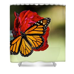 Monarch On Rose Shower Curtain