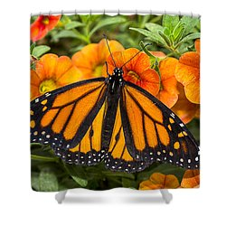Monarch Resting Shower Curtain by Garry Gay
