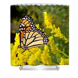 Shower Curtain featuring the photograph Monarch by Sara  Raber