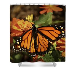Monarch Spotlight. Shower Curtain