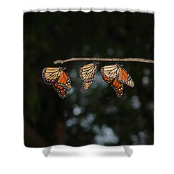 Monarch Trio Shower Curtain