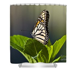 Monark Butterfly No. 2 Shower Curtain