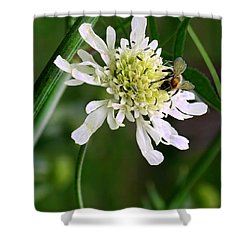 Shower Curtain featuring the photograph Monet's Garden Bee. Giverny by Jennie Breeze