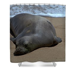 Monk Seal Sunning Shower Curtain by Brian Harig