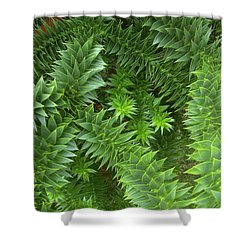 Monkey Puzzle Shower Curtain