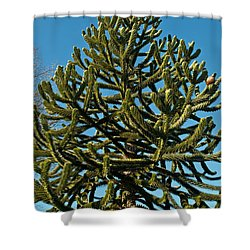 Monkey Puzzle Tree E Shower Curtain