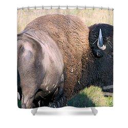 Montana Buffalo Bison Bull Shower Curtain by Karon Melillo DeVega