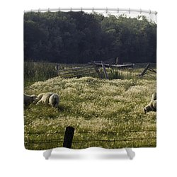 Montana Graze Shower Curtain
