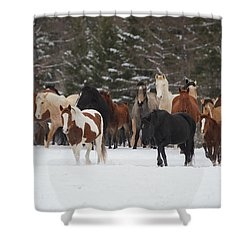 Montana Herd Shower Curtain by Diane Bohna