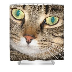 Monty The Cat Shower Curtain by Jolanta Anna Karolska