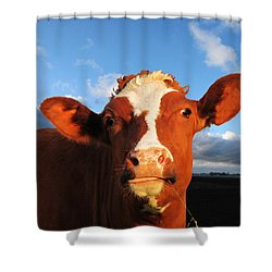Moo Don't Say Cow Shower Curtain