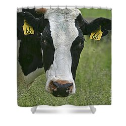 Moo Moo Eyes Shower Curtain by Deborah Benoit