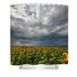 Moody Skies Over The Sunflower Fields Shower Curtain