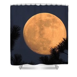 Shower Curtain featuring the photograph Moon Pines by Charlotte Schafer