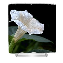 Moonflower - Rain Drops Shower Curtain by Nikolyn McDonald