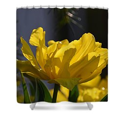 Moonlit Tulips Shower Curtain by Maria Urso