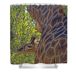 Shower Curtain featuring the photograph Mooom Im Bored by Gary Holmes