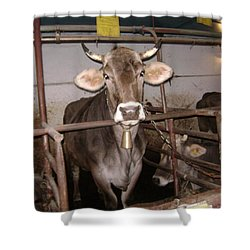 Mooooo Shower Curtain