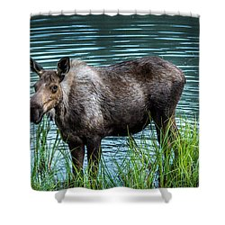 Moose Shower Curtain by Andrew Matwijec