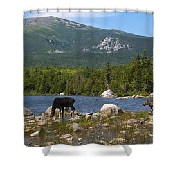 Moose Baxter State Park Maine Shower Curtain