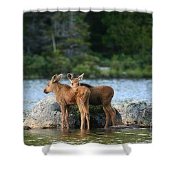 Moose Calves In Maine Shower Curtain by Jeannette Hunt