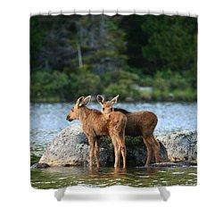 Moose Calves In Maine Shower Curtain