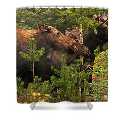 Moose Family At The Shredded Pine Shower Curtain by Stanza Widen