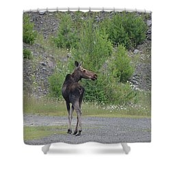 Shower Curtain featuring the photograph Moose by James Petersen