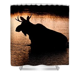 Moose Silhouette 3569   Shower Curtain by Brent L Ander
