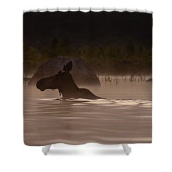 Moose Swim Shower Curtain by Brent L Ander